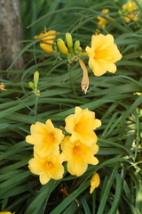 I love, love these daylilies.