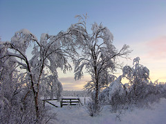 Gate closed for the winter.. (elysea100) Tags: trees winter white snow cold norway october bravo gate arctic tana finnmark magicdonkey superaplus aplusphoto superbmasterpiece superhearts coolestphotographers elysea