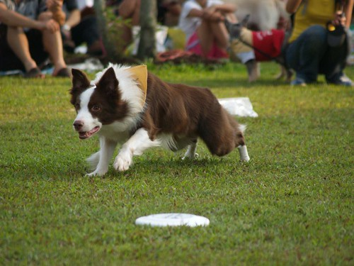 Frisbee demo - National Dog Walk 2007, WCDR