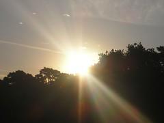 136 Sara en Brownsea - Amanecer 1 agosto