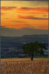 Tree's View (Ally Mac) Tags: light sunset tree field landscape scotland edinburgh fields hdr goldenhour gloaming feilds 70300is naturesfinest balerno anawesomeshot
