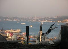 jumping over bosphorus (H e r m e s) Tags: cat turkey jump jumping türkiye istanbul jumper katze bosphorus süleymaniye