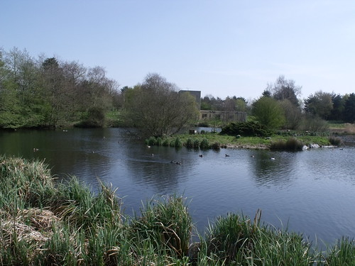 Pensthorpe - Mill Pond