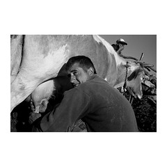 . (Emmanuel Smague) Tags: leica travel people blackandwhite bw men film work 35mm photography cow europe shepherd islam report documentary kosovo mp muslims balkans goran gorani ethnicgroup emmanuelsmague