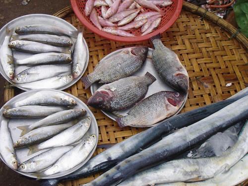 fishmonger's wares