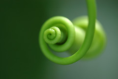 Green - Tendril - by t_buchtele