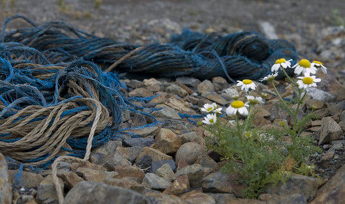 Rope, Rocks, And Flowers