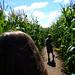 Singleton Maize Maze