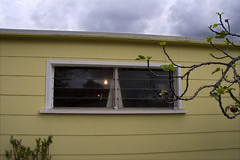 Day 001 -- 21 Sept (susan catherine) Tags: window clouds explore apad figtree myoffice atmyhouse aphotoaday weirdlight inthebackyard wassupposetobeaguesthouse