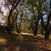 Chaparral Outside Lake Arrowhead, CA