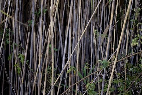stalks.jpg