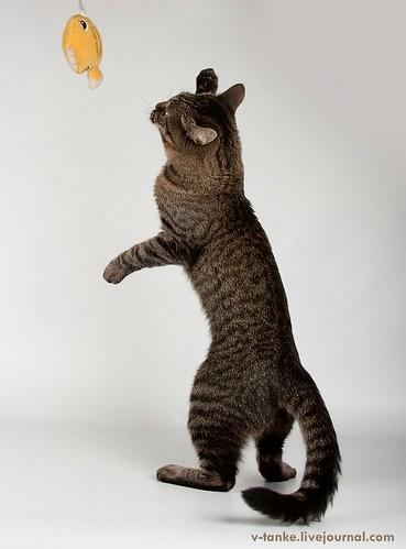 Всем поклонникам кота Пиндыка посвящается :) Pindo & Co (14)