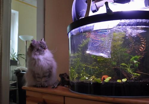 Neue Fische