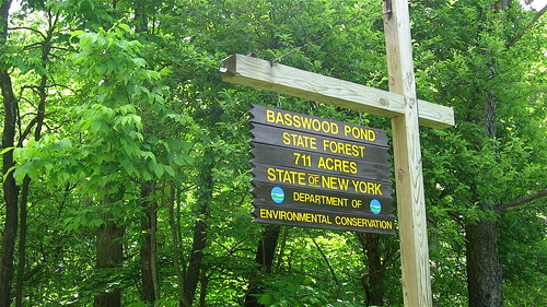 Basswood sign