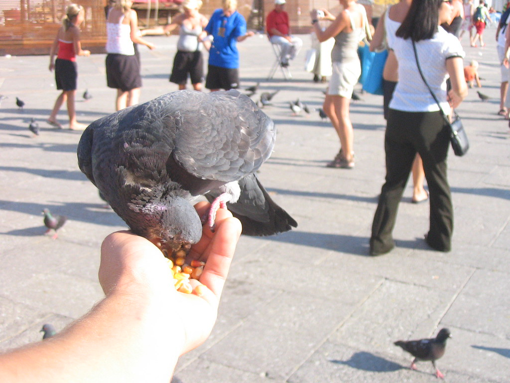 Feeding a Pidgeon at St. Mark's Square in Venice