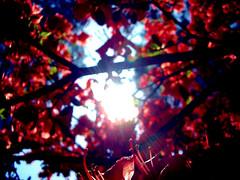Infinity (Aube insanit) Tags: light red color tree fleur sunshine de rouge licht soleil spring lumire infinity dream boom sole fiore albero lente rood rosso arbre printemps zon luce bloem lustro molla glan clat