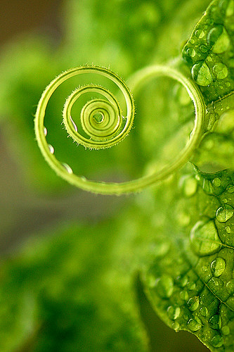 A green heart for you !! have a sweet and nice weekend.