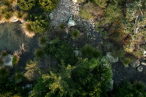 Japanese garden from above