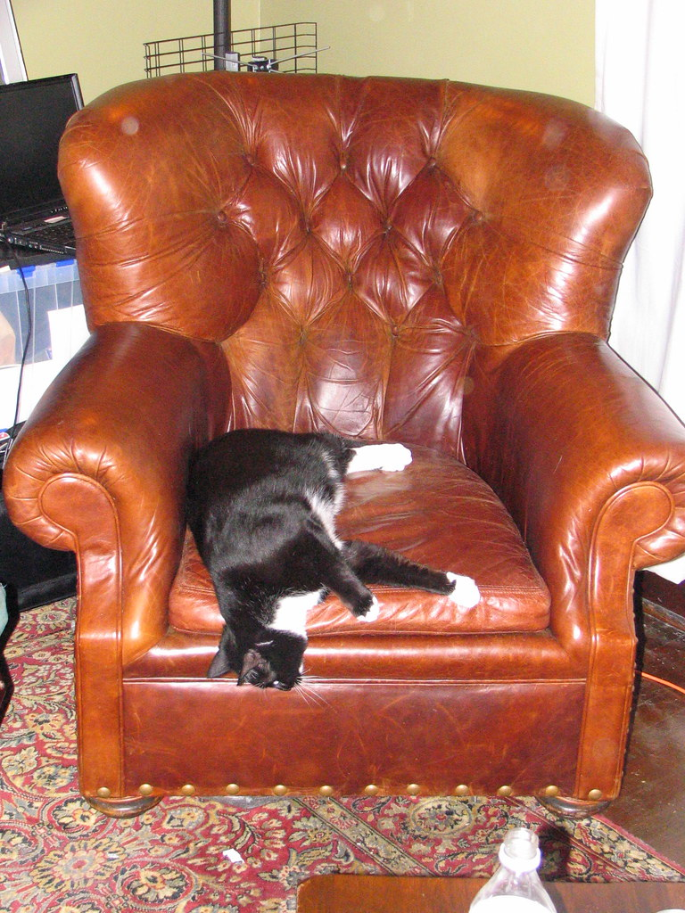Sherman likes the armchair