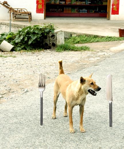 Yangshuo Dog