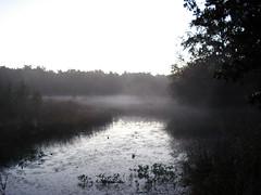 lake (kirstie van noort) Tags: wood morning lake water fog design eindhoven van kirstie wellbeing designacademy noort designacademie designacademyeindhoven vannoort kirstievannoort manandwellbeing kirstievn wellbeingdesignacademyeindhoven wellbeingdesignacademie designacademywellbeing