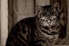 pohled kočičí