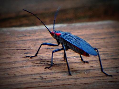 6-22-10 bug