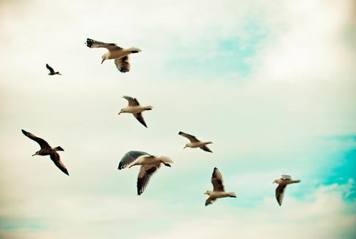 beefy birds