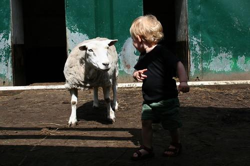 Jef en het boze schaap