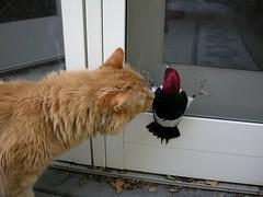 DSCN0261.JPG (nikonmo) Tags: red bird woodpecker headed