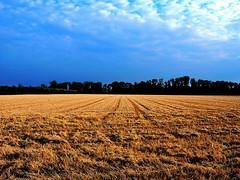 Harvest (gatowlion) Tags: bayern bavaria harvest