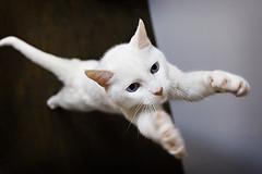 peach hug (lulu.photo) Tags: cat nikon d2x kitty coolest luluphoto bestofcats impressedbeauty bocwinner misterpeaches boc0807