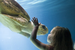 Generations (Shane Woodall) Tags: newyork ava brooklyn contrast coneyisland aquarium turtle august 2007 critique tds blueribbonwinner impressedbeauty theunforgetablepictures shanewoodallphotography