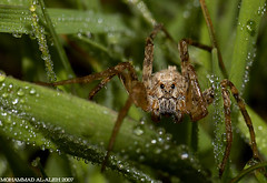 SPIDER CAMEL (MOHAMMED AL-SALEH) Tags: picturecollection parkstock kvwc kuwaitvoluntaryworkcenter  kuwaitvwc
