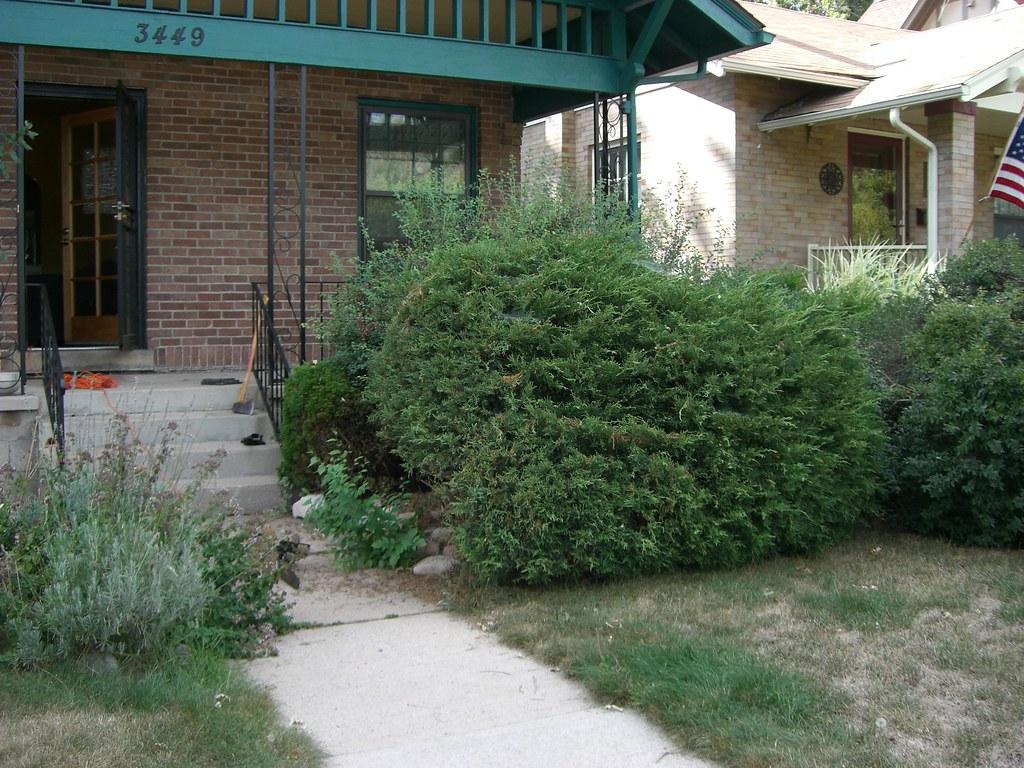 front yard - pre shrub-removal - 090207