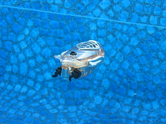 Submarine (Z303) Tags: toy underwater submarine swimmingpool