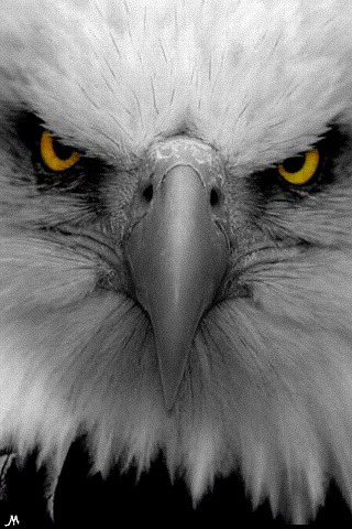 Wallpaper Of Eagle. Eagles iPhone Wallpaper
