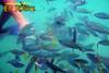Honda Bay Snake Island Fish Feeding