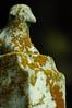 Soundless Sleep the Meek (BeautifulRust) Tags: yellow poem headstone gravestone lamb lichen marble dickinson