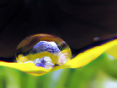 Waterdrop in the morning - Have a nice week! :) (Eperke) Tags: flower macro reflection nature rain canon golden globe waterdrop contest wolke powershot termszet s3 felh helluva naturesfinest thebigone fivestars vzcsepp flickrsbest photographyrocks canonpowershots3is tkrkp superbmasterpiece goldenphotographer wowiekazowie diamondclassphotographer flickrdiamond frhwofavs ysplix photofaceoffwinner fivestarsphotograph pfogold fotocompetition fotocompetitionbronze