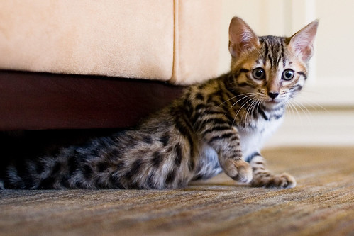 Kitten-12.jpg