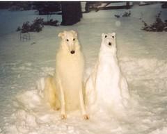 Hund und Schneehund