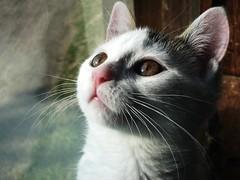 Kitty (Crystal <3) Tags: crystal3 bestofcats boc0807 heavyhorse42