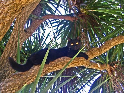 Alice In Palm Tree.LowRezjpg