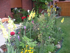 IMG_0166 (moideniznunez) Tags: flowers garden wal