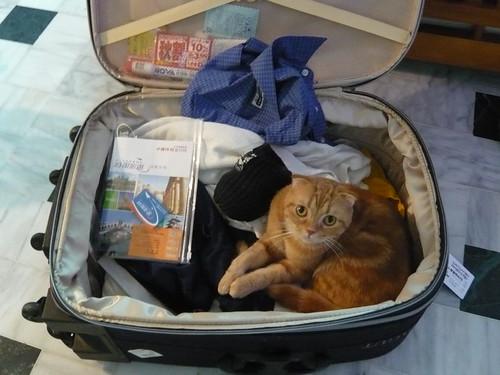 花輪也想跟去旅行