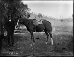 View of man with horse standing under pepper tree