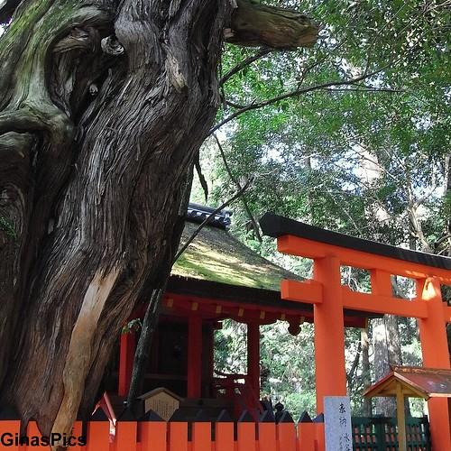 Holy Tree Torii Nara