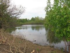 Vernal Pond (edenpictures) Tags: nyc newyorkcity ny newyork pond ducks wetlands statenisland naturepreserve mountloretto vernalpond
