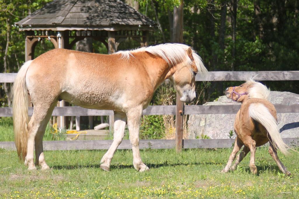 horses 222x